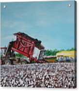 Cotton Pickin' Business Acrylic Print