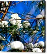Cotton Pickin Snow Acrylic Print