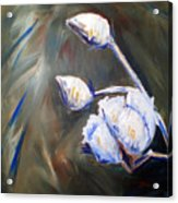 Cotton Plant 2 Acrylic Print