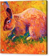 Cottontail I Acrylic Print by Marion Rose