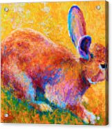 Cottontail II Acrylic Print by Marion Rose