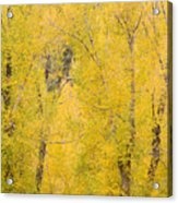 Cottonwood Autumn Colors Acrylic Print