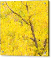 Cottonwood Colors  Acrylic Print