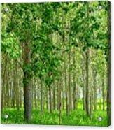 Cottonwood Grove Acrylic Print by Will Borden