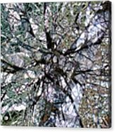 Cottonwood Montage Acrylic Print