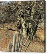 Cottonwood Stand Acrylic Print