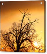Cottonwood Sunrise - Vertical Print Acrylic Print