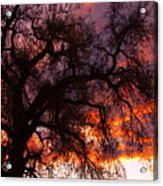 Cottonwood Sunset Silhouette Acrylic Print
