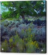 Cottonwood Tree In Old Field Acrylic Print
