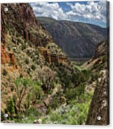 Cottonwoods In The Canyon Acrylic Print