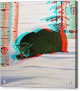 Cougar - Use Red-cyan 3d Glasses Acrylic Print