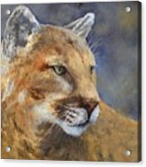 Cougar Acrylic Print by Debra Mickelson