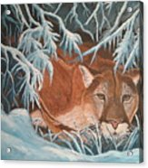 Cougar In Snow Acrylic Print