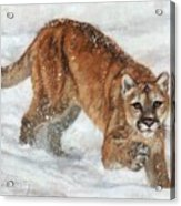 Cougar In The Snow Acrylic Print