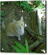 Cougar In The Woods Acrylic Print