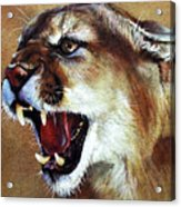 Cougar Acrylic Print by J W Baker