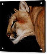 Cougar Acrylic Print