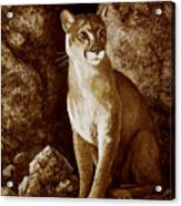 Cougar Wait Until Dark  Acrylic Print