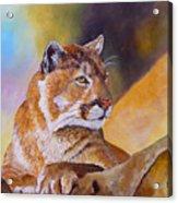 Cougar Wildlife Acrylic Print