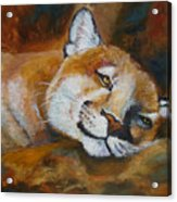 Cougar Wildlife Painting Acrylic Print