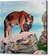 Cougars Acrylic Print