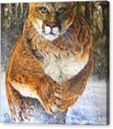 Couger Acrylic Print