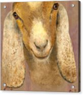 Country Charms Nubian Goat With Bright Eyes Acrylic Print