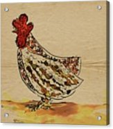 Country Chicken Acrylic Print