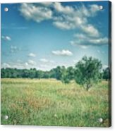Country Fields Acrylic Print