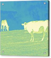Country Hillside Acrylic Print