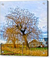 Country Life Artististic Rendering Acrylic Print