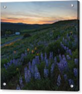 Country Meadow Sunset Acrylic Print
