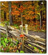 Country Road In Autumn Forest Acrylic Print