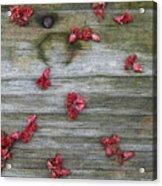 Country Seedling Acrylic Print