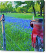 Country Western Blue Bonnets Acrylic Print
