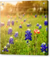 Country Wildflowers Acrylic Print
