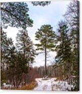 Country Winter 14 Acrylic Print