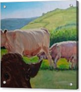 Cow And Calf Painting Acrylic Print