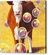 Cow Bubbles Acrylic Print
