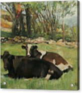 Cow Buddies Acrylic Print