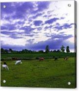 Cow Field Acrylic Print