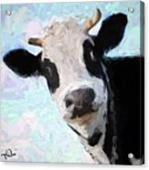 Cow Head Acrylic Print