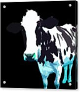 Cow In A Black World Acrylic Print
