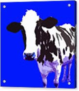 Cow In A Blue World Acrylic Print