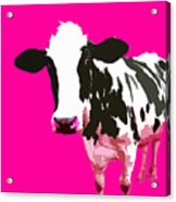 Cow In A Pink World Acrylic Print