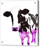 Cow In A White World Acrylic Print