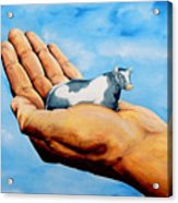 Cow In Hand Acrylic Print