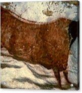 Cow: Lascaux, France Acrylic Print