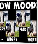 Cow Moods Acrylic Print