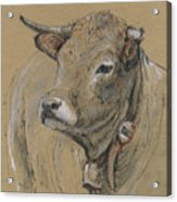 Cow Portrait Painting Acrylic Print